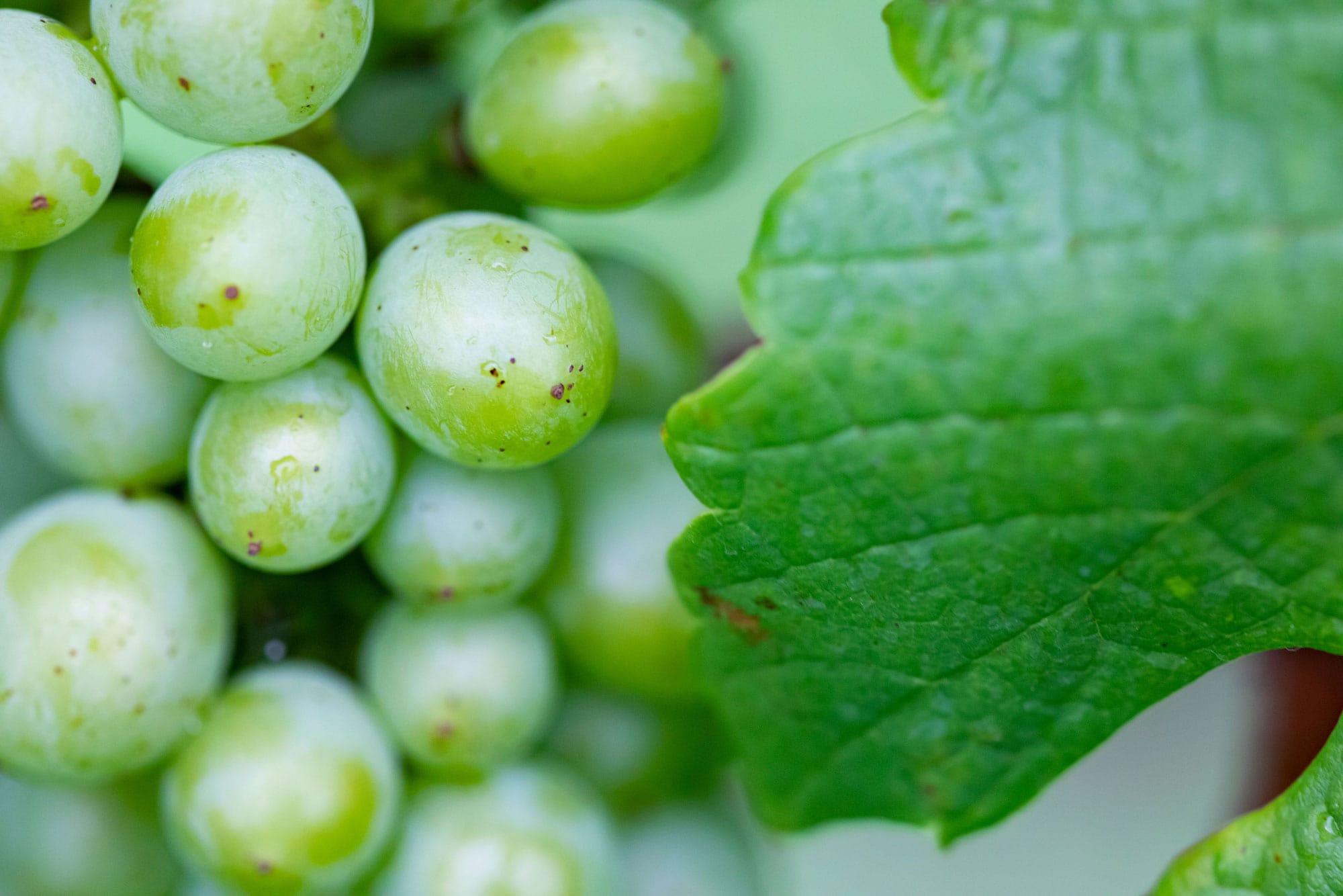モンガク谷ワイン